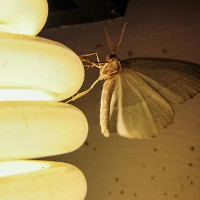Đèn LED màu nóng ít thu hút muỗi hơn so với đèn màu lạnh