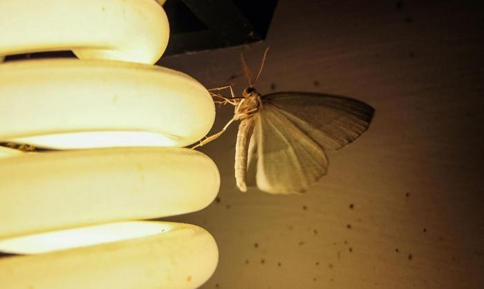 Các loại đèn khác nhau thì khả năng thu hút muỗi cũng khác nhau.