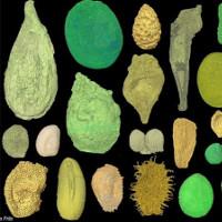 Phát hiện hạt giống hoa ngủ đông từ 110 triệu năm trước