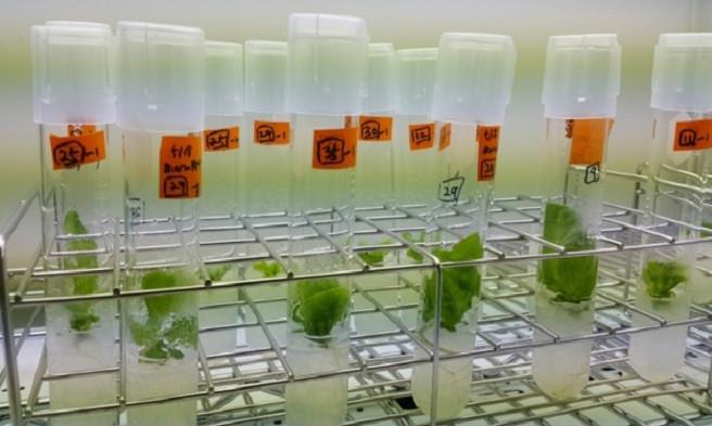 CRISPR được kỳ vọng sẽ là chìa khóa để bắt đầu nền nông nghiệp công nghệ cao trong tương lai.