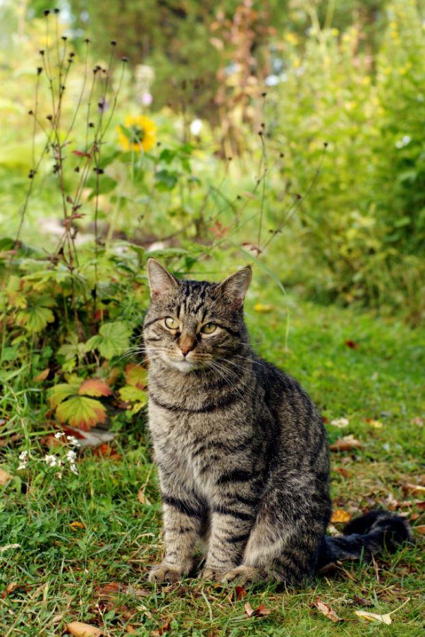 """Mèo tự """"thuần dưỡng"""" chúng"""
