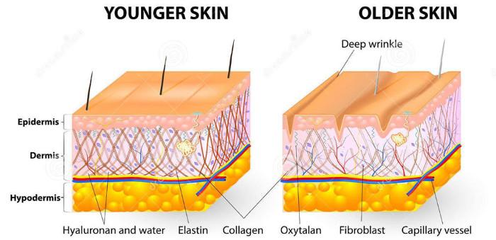Giảm sản xuất collagen khiến da dễ khô, nứt.