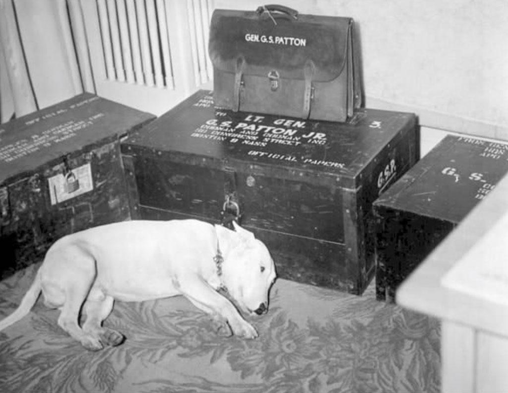 Hình ảnh chó của Tướng George S. Patton sau ngày ông mất (ngày 21 tháng 12 năm 1945)