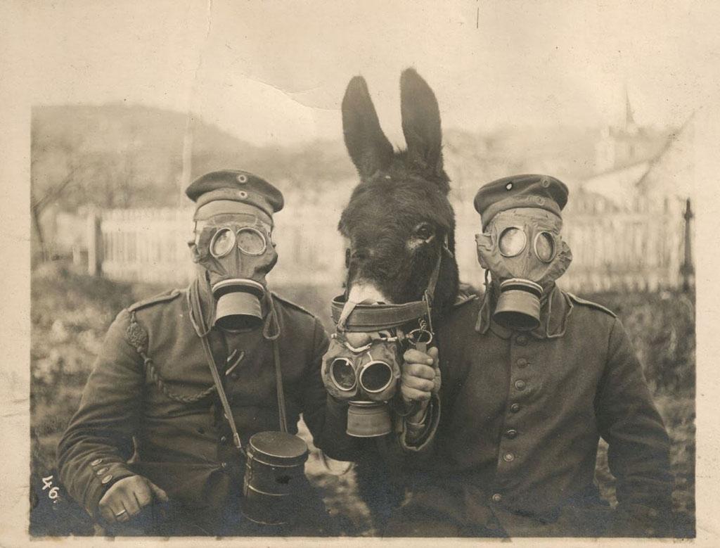 Hai người lính Đức và con la đeo mặt nạ khí trong Thế chiến thứ II, năm 1916