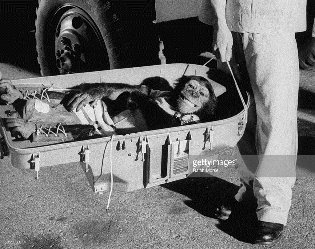 """""""Ham tinh tinh"""" trở về trái đất sau chuyến bay không gian lịch sử của mình vào năm 1961"""