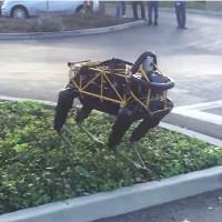 Video: Chó nhà thực ra chẳng ưa gì chó robot như bạn tưởng đâu