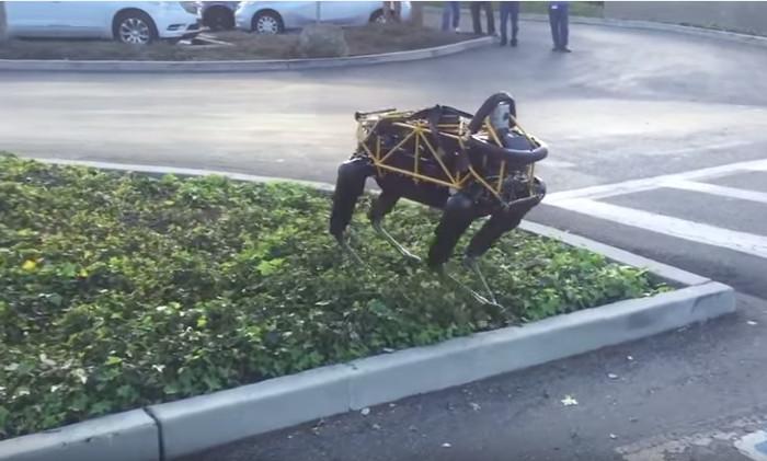 Chó nhà ghét chó robot hơn bạn tưởng đấy.