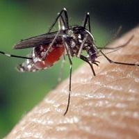 5 kiến thức cơ bản ai cũng phải biết về virus Zika