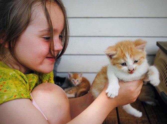 Những người nuôi mèo được cho là có khả năng trí tuệ nhỉnh hơn những người nuôi chó