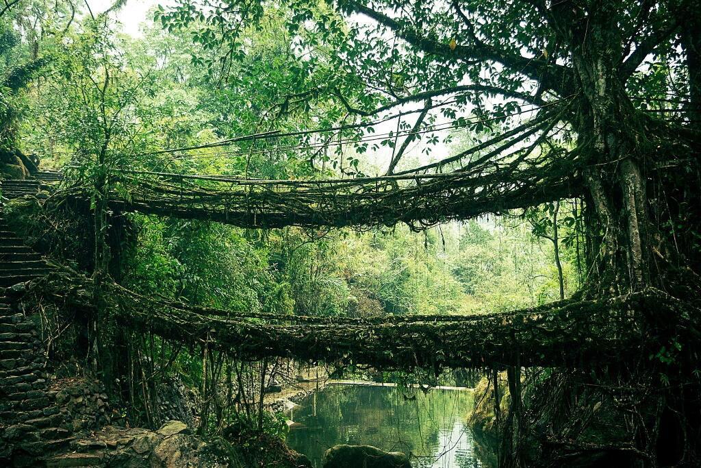 Cầu Root tại Ấn Độ