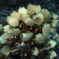 Khu bảo tồn đảo Phượng Hoàng