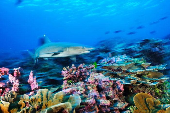 Khu bảo tồn đảo Phượng Hoàng nằm trên một vùng biển rộng lớn với diện tích khoảng 408.250 km2.