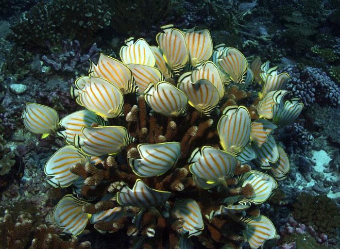 Khu bảo tồn là một trong những hệ sinh thái biển đa dạng nhất hành tinh.