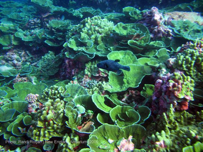 Ở đây có những loại san hô sống sâu dưới lòng đại dương nhưng cũng lại có những loại san hô sống trong vùng nước cạn