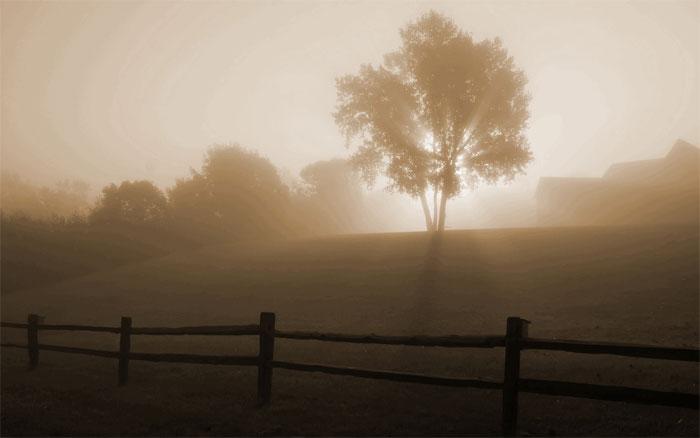 Sương mù bức xạ (Radiation fog).