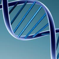 Phát hiện con lưỡng tính nhờ xét nghiệm ADN kiểm tra huyết thống