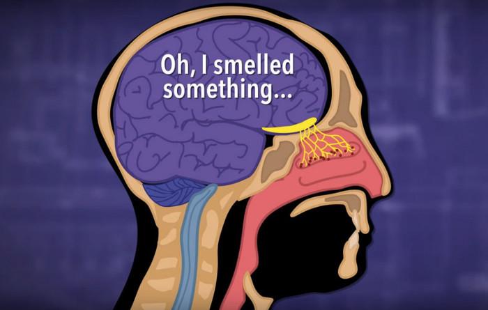 Mũi là cơ quan phức tạp và không kém phần quan trọng đối với hệ miễn dịch.