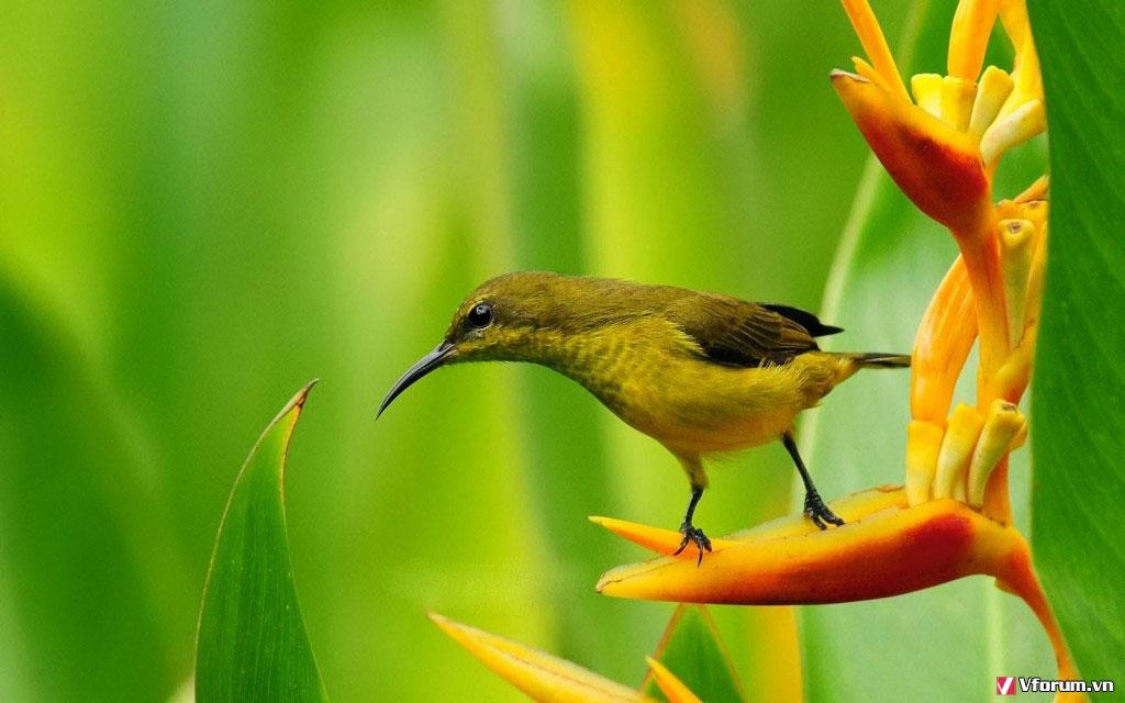 Chú chim này đang làm gì thế nhỉ?