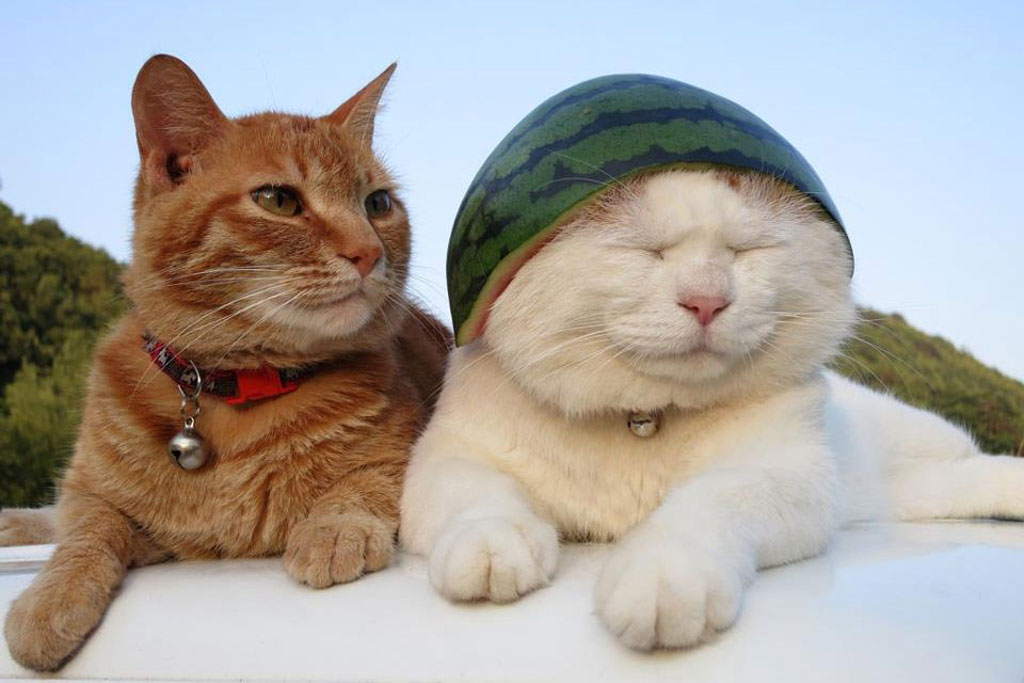 Kiểu nón mới khó ai bì kịp!