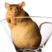 Thử nghiệm trên chuột cho thấy chế độ ăn giàu chất béo có thể gây ung thư
