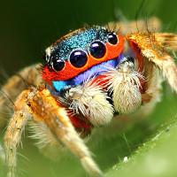 Những điều ít ai biết về loài nhện