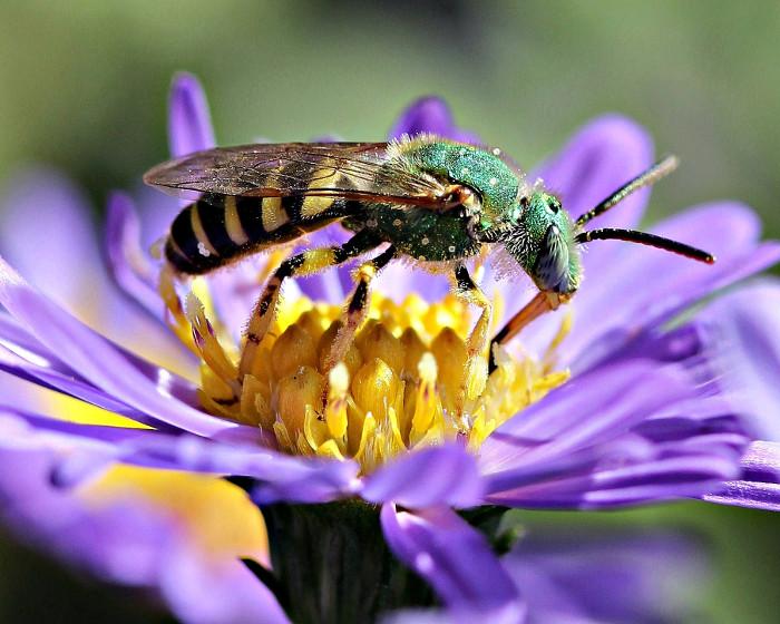 Các loài thụ phấn đang gặp rất nhiều mối đe dọa, gây ảnh hưởng tới hoạt động thụ phấn.