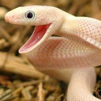 """Vẻ đẹp """"chết người"""" của các loài rắn độc - Phần 1"""