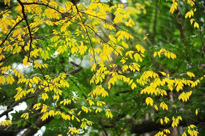 Hai mảng màu vàng - xanh tạo nên vẻ đẹp kỳ lạ.