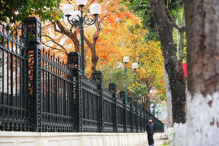 Con phố trở nên đẹp hơn với sắc màu vàng đỏ của lộc vừng.