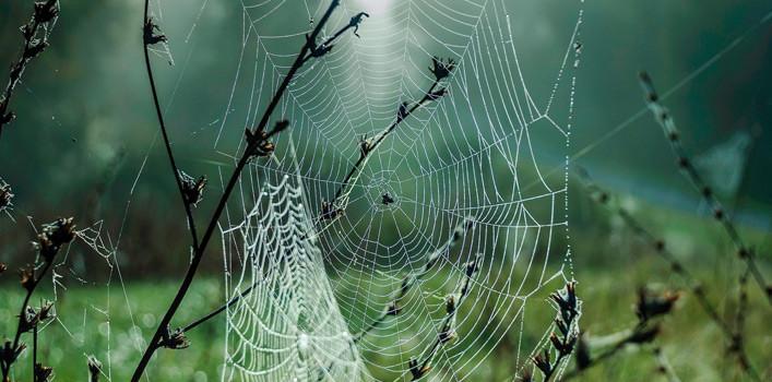 Có đến hàng trăm loài nhện khác nhau, đa số chúng đều có khả năng tiêm nọc độc.