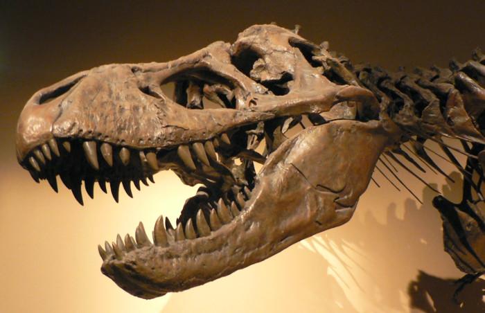 Hóa thạch không phải chỉ là xương động vật.