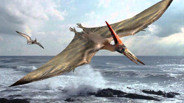 Pterodactyl là thằn lằn có cánh chứ không phải khủng long bay.