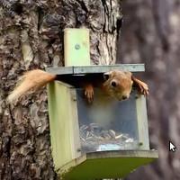 Video: Khoảnh khắc hài hước của động vật