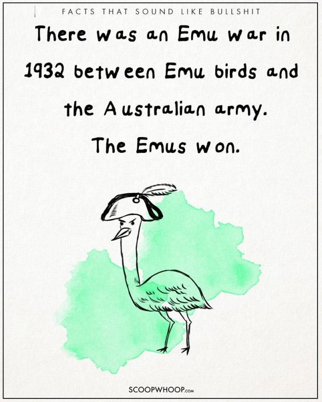 Năm 1932, một cuộc chiến tranh đã xảy ra giữa chim Emu và quân đội Úc và những chú chim Emu đã thắng
