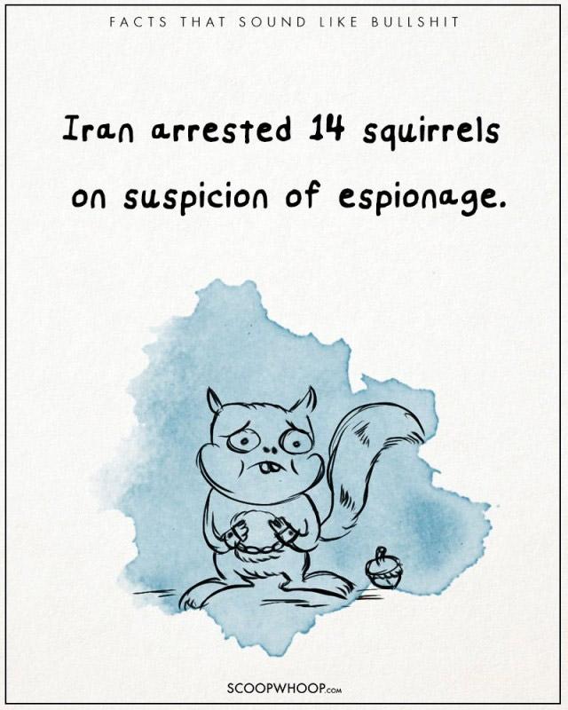 Năm 2007, 14 chú sóc đã bị bắt ở Iran vì mang theo thiết bị gián điệp của các cơ quan nước ngoài