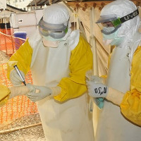 Điều chế thành công huyết thanh điều trị Ebola trên khỉ