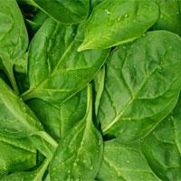 Đến bây giờ người ta mới tìm ra lý do tại sao ăn rau lại tốt cho tiêu hóa