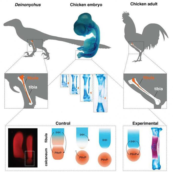 Cho tới gần đây thì sự tuyệt chủng của khủng long 65 triệu năm trước vẫn là một trong những bí ẩn lớn nhất của khoa học.
