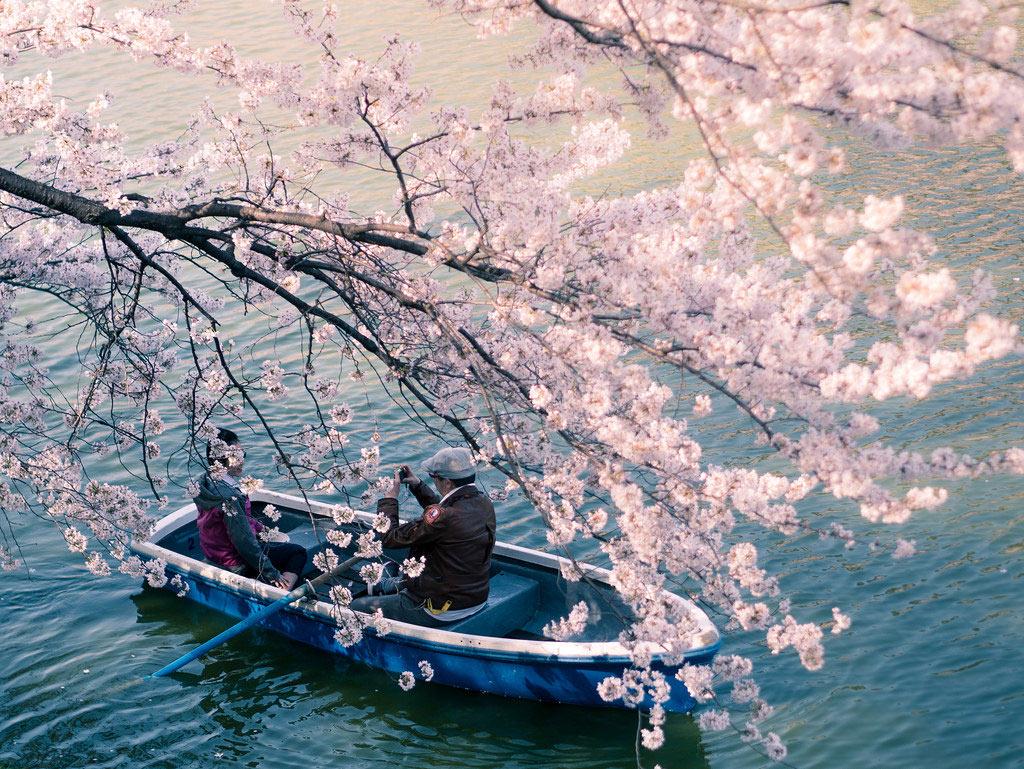 Đến Nhật Bản vào đúng mùa hoa anh đào, du khách sẽ được đắm mình trong các lễ hội hoa tuyệt đẹp và được người dân nơi đây trải lòng về loài quốc hoa cao quý này