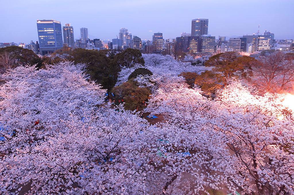 Giữa nơi đô thị tấp nập, người ta vẫn cố gắng dành một mảng xanh, như lưu trữ một khoảng bình yên trong tâm hồn