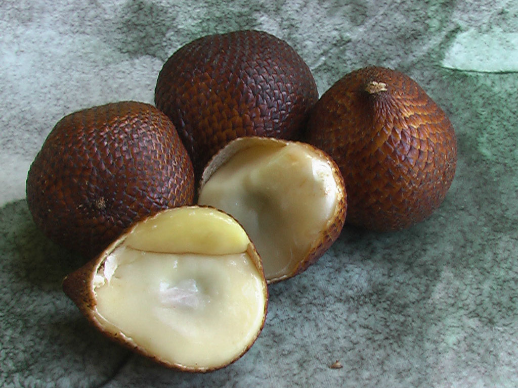 Salak là một loài cây thuộc họ cau bản địa của Indonesia, Brunei và Malaysia. Người ta cũng gọi đây là trái vảy rắn do vỏ của nó có cấu tạo vảy màu nâu đỏ.