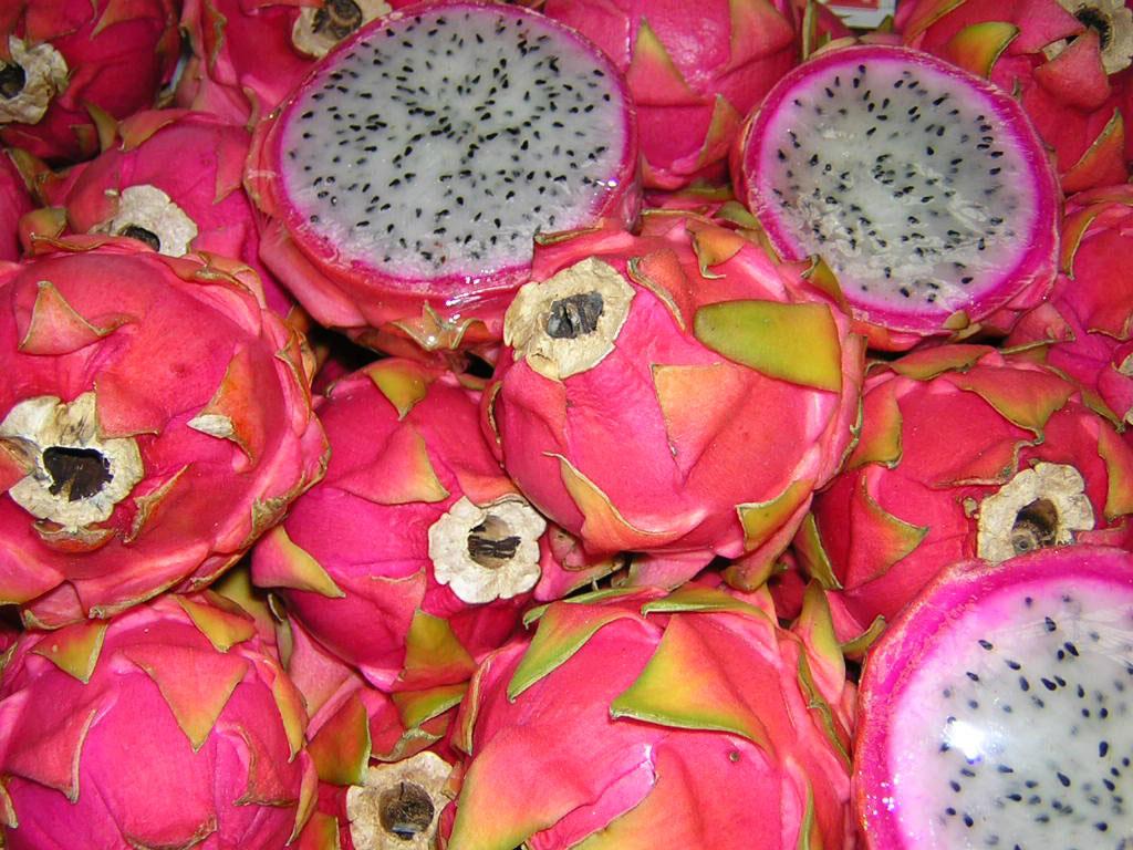Cây thanh long trông giống như xương rồng và chỉ nở hoa vào ban đêm. Thanh long phổ biến ở nhiều nước và nó có nguồn gốc từ Mexico.