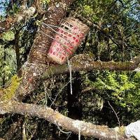 Mục đích ít ai biết của tục thụ táng trên cây