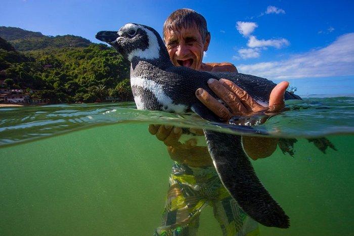 Ông Joao Pereira de Souza cùng chú chim cánh cụt Dindim.