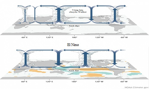 Vòng lưu chuyển Walker trong điều kiện bình thường (hình trên) và khi hiện tượng El Nino diễn ra (hình dưới).