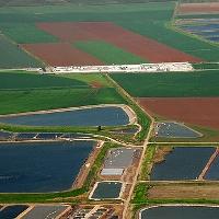 Phương pháp tưới tiêu tiên tiến của Israel đã biến sa mạc khô cằn thành nơi trồng rau, nuôi cá
