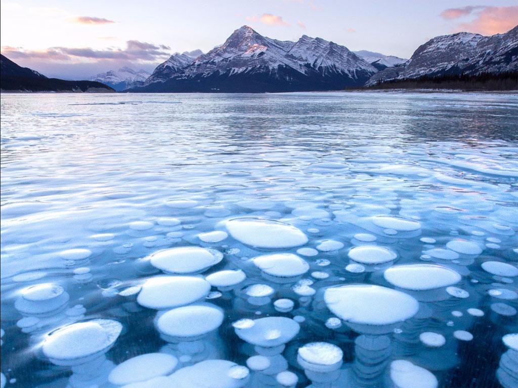 Bức ảnh này được chụp tại hồ Abraham- Alberta. Khí metan từ các thực vật chết bốc lên mặt nước và bị chặn lại dưới lớp băng đá vô tình tạo nên những quả bong bóng băng này