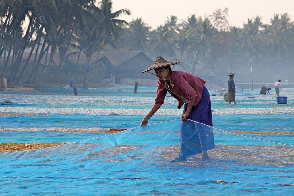 Người dân làng chài Ngapali ở Rakhine phơi lưới.