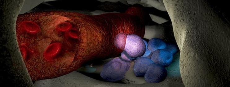 Phân tử giúp trích xuất tế bào gốc từ người hiến tặng.