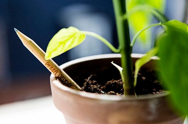 Trồng cây bằng bút chì là phát minh mới ấn tượng và cực hữu ích.